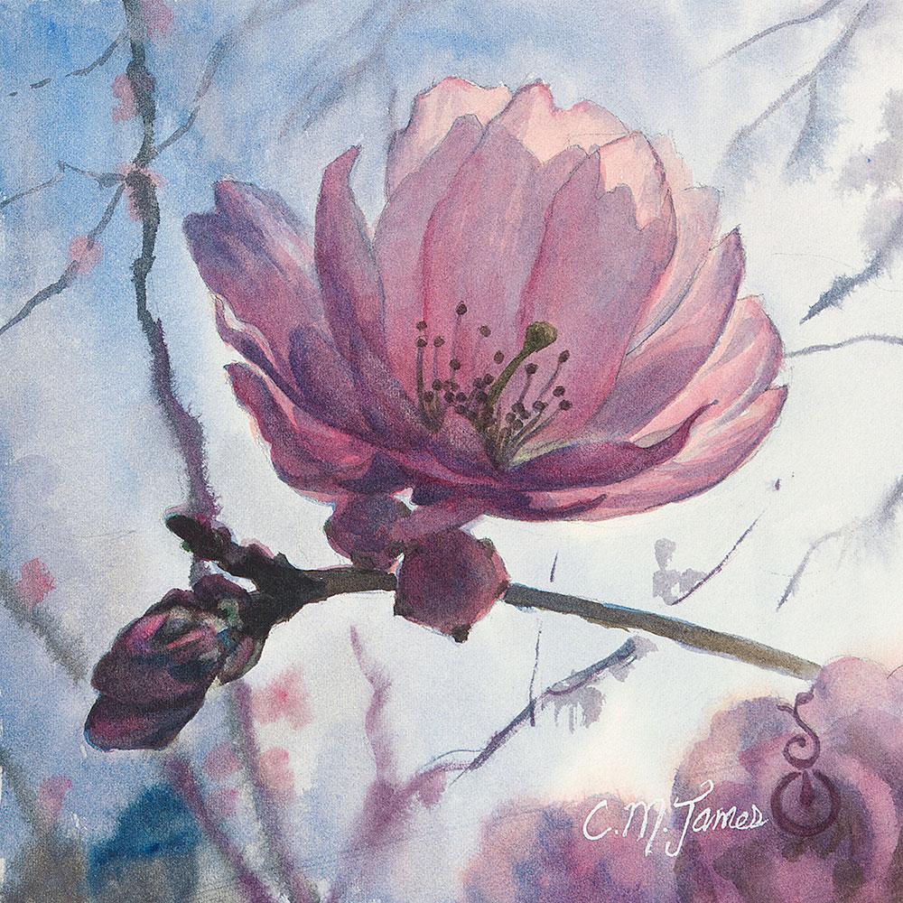 Cherry Blossom 8x8 Bellevue Fine Art