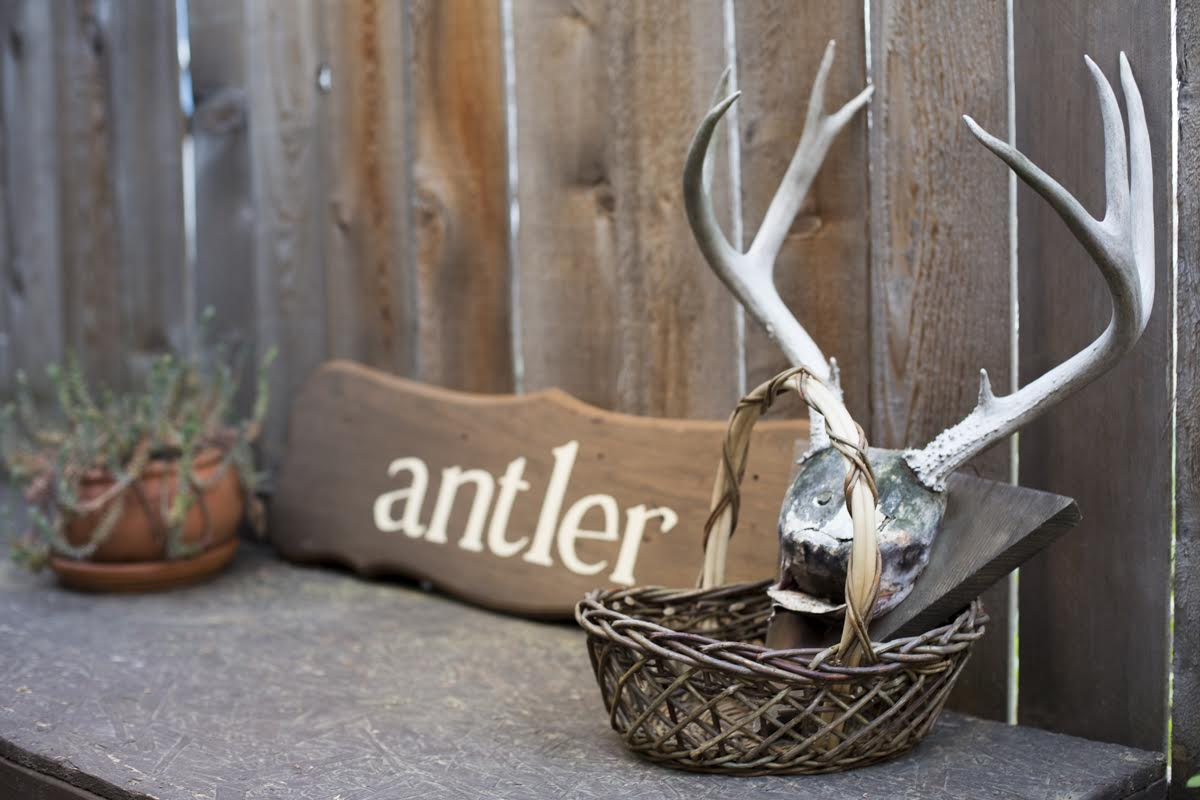 syd-bee-antler-5