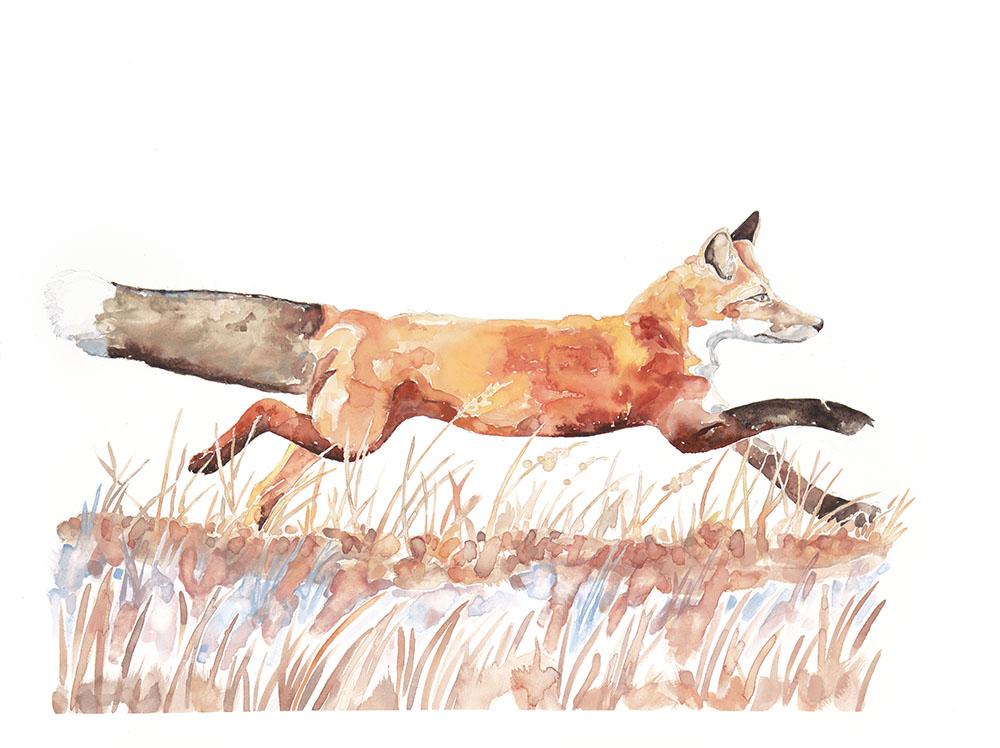 """""""Fox Running"""" by Tara Alverson"""